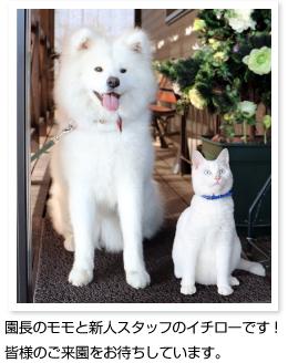 momo_ichiro